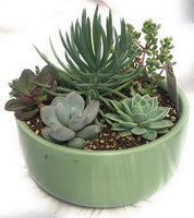 Desert Delights Footed Bowl Jade