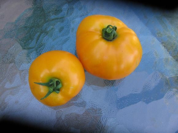 Yellow Tomato, Low-acid tomato
