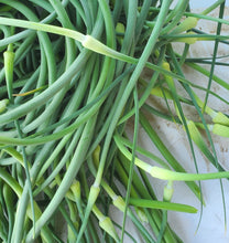 Load image into Gallery viewer, Garlic Scapes (Half Pound Bundle)