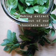 Load image into Gallery viewer, Chocolate Mint Extract