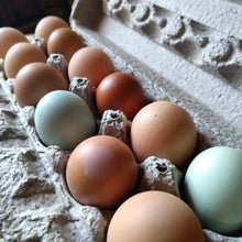 Load image into Gallery viewer, Farm Fresh Pasture Raised Chicken Eggs (Dozen)-Roots and Dreams Farm