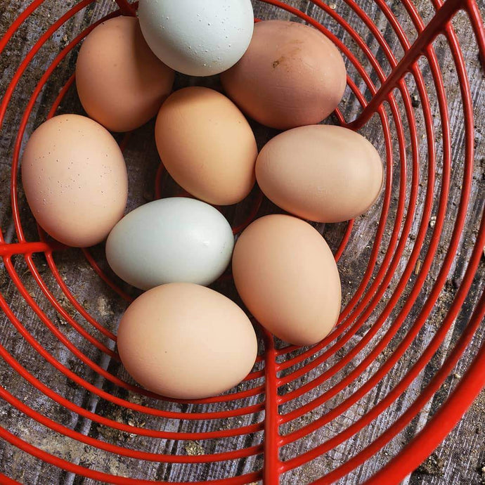 Farm Fresh Pasture Raised Chicken Eggs (Dozen)-Roots and Dreams Farm