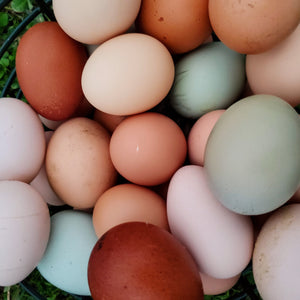 Farm Fresh Pasture Raised Chicken Eggs (Dozen)