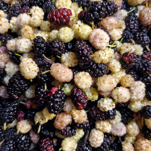 Fresh Red and White Mulberries