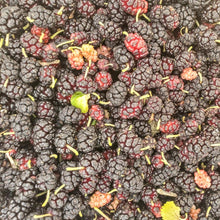 Load image into Gallery viewer, Black Mulberries