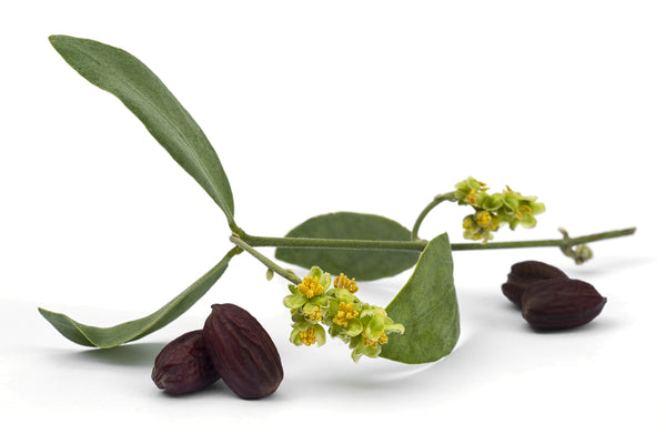 The benefits of organic Jojoba Oil for skin