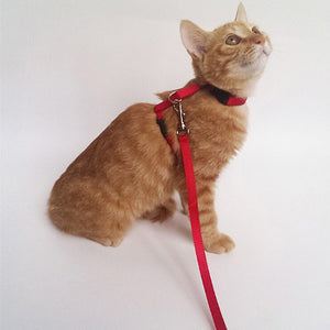 Cat Leash And Adjustable Collar - Pet Shop Boys and Girls