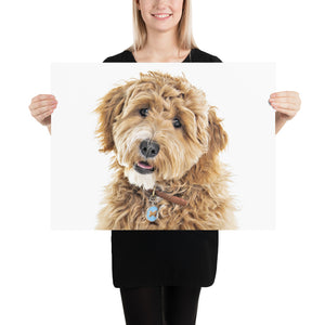 Goldendoodle Photo Paper Poster - Zabbow Goldendoodle Pet Products