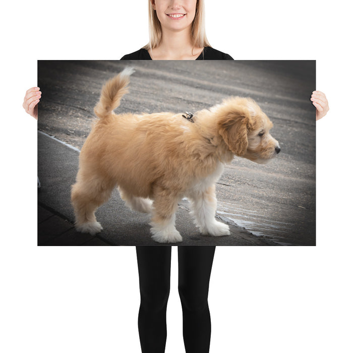 Goldendoodle Puppy Photo Paper Poster