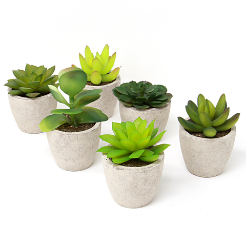 Set of 6 Artificial Succulent Plants