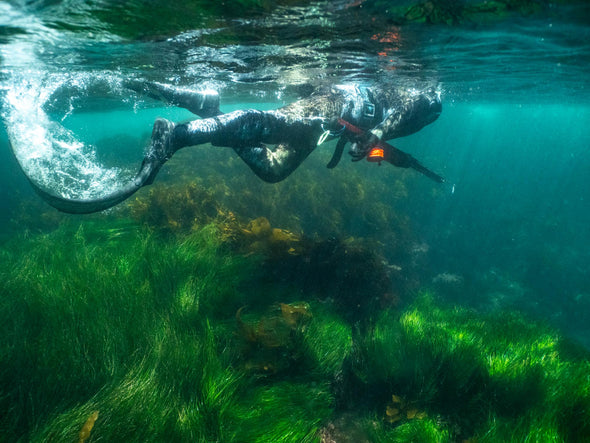 Spearfishing Introduction Tour
