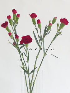 Carnation (Red)