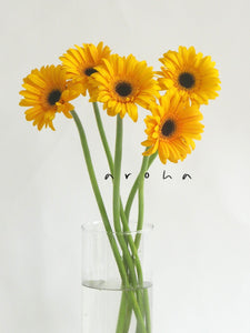 Gerbera (Yellow)