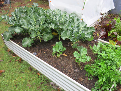 Raised Garden Bed - Extra Large