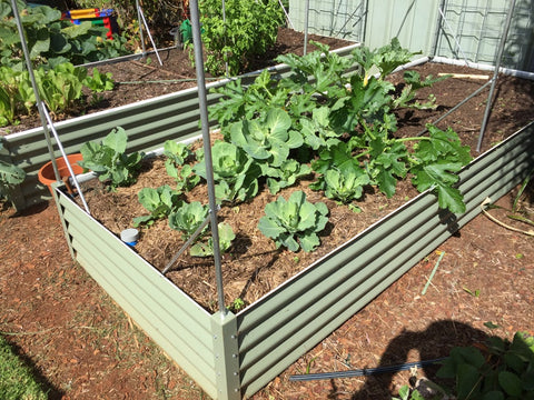 Raised Garden Bed - Jumbo