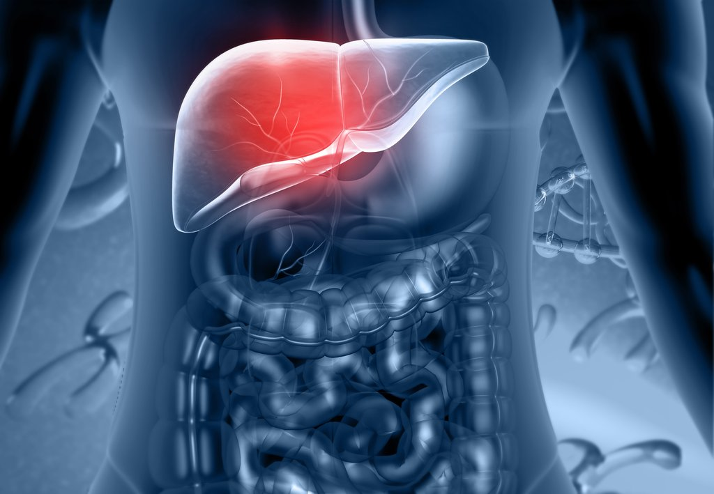 The Liver Is the Second Largest Organ in the Body