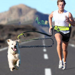 Hands-free bungee dog leash