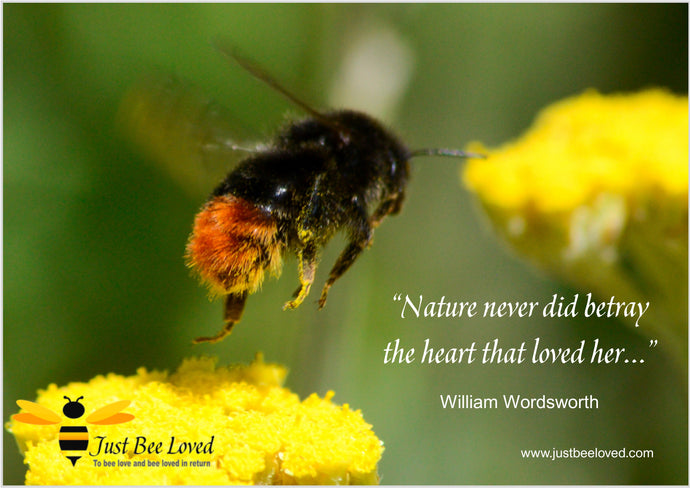 9 Beautiful Bee & Nature Quotes