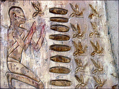 Ancient Egyptian Hieroglyphs of Honey Bees