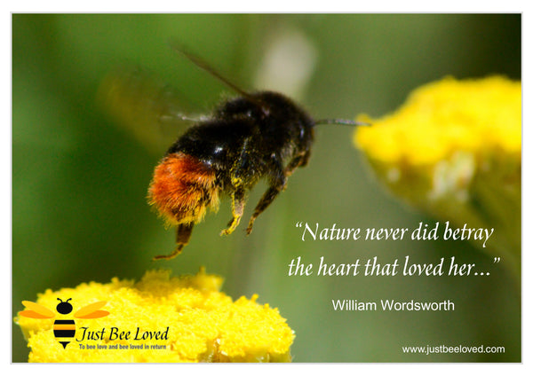 Bee and Nature Quotes William Wordsworth