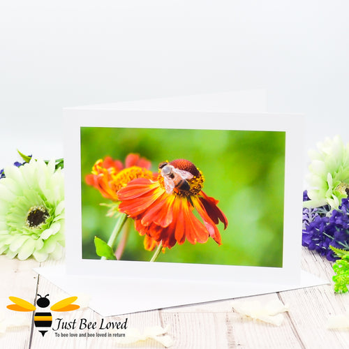 Honey Bee Foraging Blank Photographic Greeting Card image by Landscape & Nature Photographer Yasmin Flemming