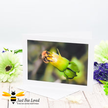 Load image into Gallery viewer, Bumblebee Drinking Nectar Photographic Blank Greeting Card image by Landscape & Nature Photographer Yasmin Flemming