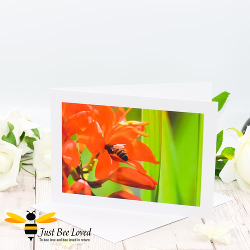 Honey Bee and Orange Lily Blank Photographic Greeting Card image by Landscape & Nature Photographer Yasmin Flemming