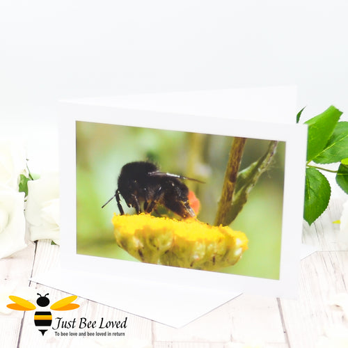 Red Tailed Bumblebee Photographic Blank Greeting Card image by Landscape & Nature Photographer Yasmin Flemming