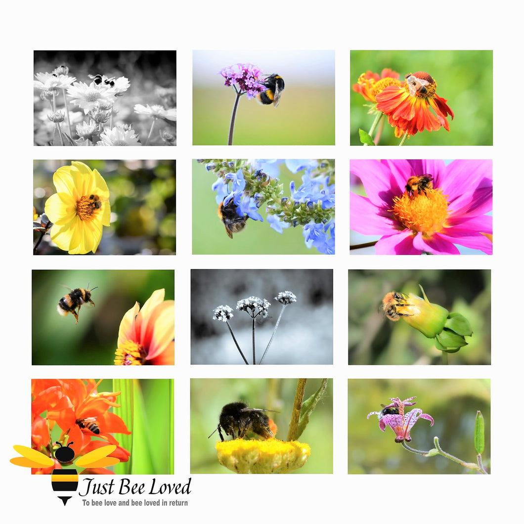 12-Pack Photographic Bee Honey Bee Bumblebees Portraits BLANK Greeting Cards images by Landscape & Nature Photographer Yasmin Flemming