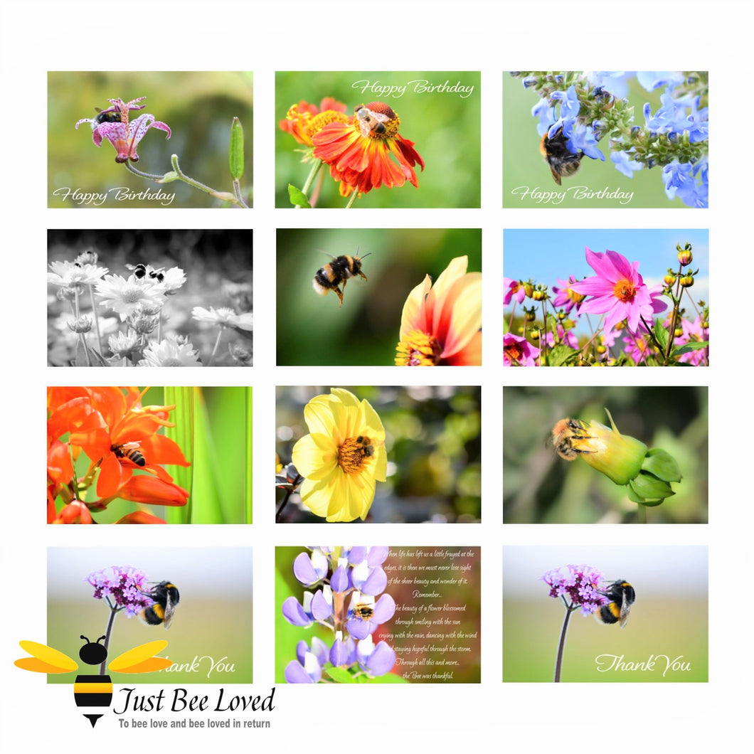 12 Bee Portraits of Honey Bees and Bumblebees Photographic Greeting Cards Value Pack images by Landscape & Nature Photographer Yasmin Flemming