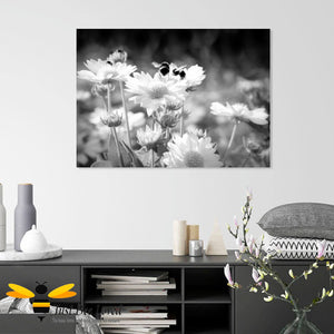 Just Bee Loved Home Decor Large Canvas of Daisy Dancing Bumblebees Black and white Wall Decor by Landscape & Nature Photographer Yasmin Flemming