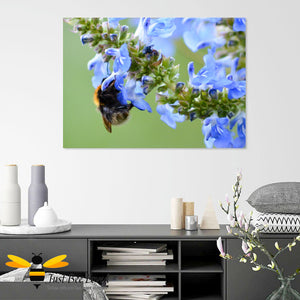Just Bee Loved Bumblebee and Blue Saliva Graphic Canvas Art Wall Decor by Landscape & Nature Photographer Yasmin Flemming