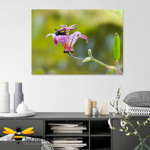 Just Bee Loved Bumblebee inside Flower Cup Graphic Wall art Canvas decor by Landscape & Nature Photographer Yasmin Flemming