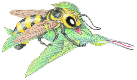 MATT FURIE -The Bird and The Bee