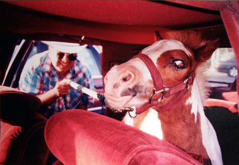 DAVE SCHUBERT - Horse in back seat of car Central Valley Ca 2000