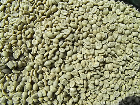 Kenya Nyeri AB+ green coffee beans y