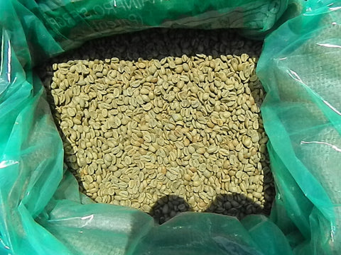 Panama finca La Berlina Gesha Nat green coffee beans Y