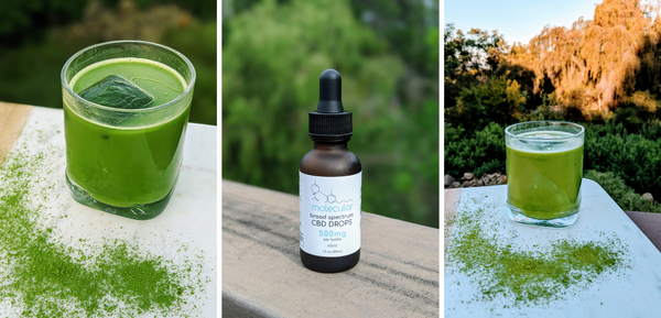 Minty CBD Matcha Latte Recipe by Shelby Torese at Molecular CBD Shop