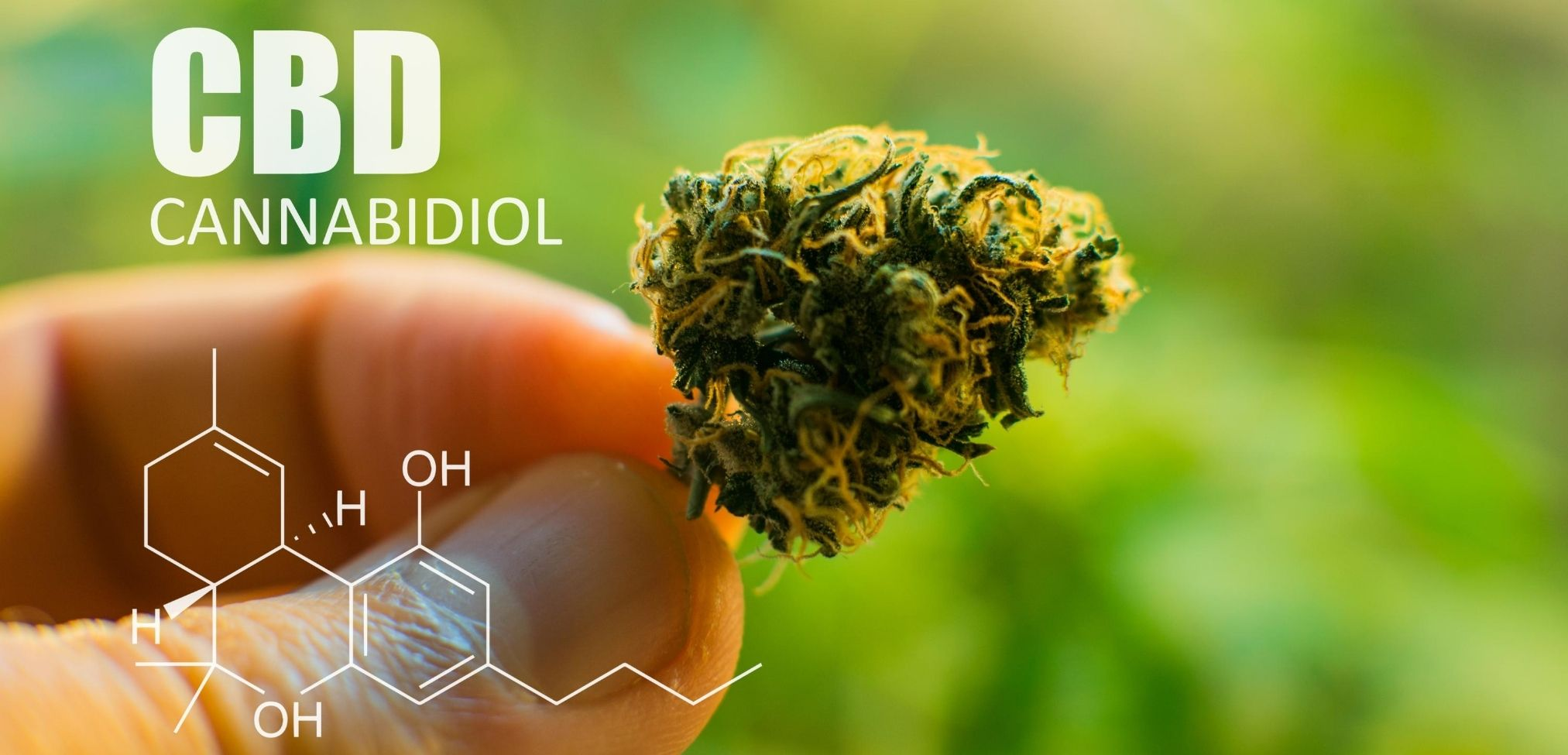 What is CBD | What is Hydrophilic CBD | Read More at Molecular CBD Shop