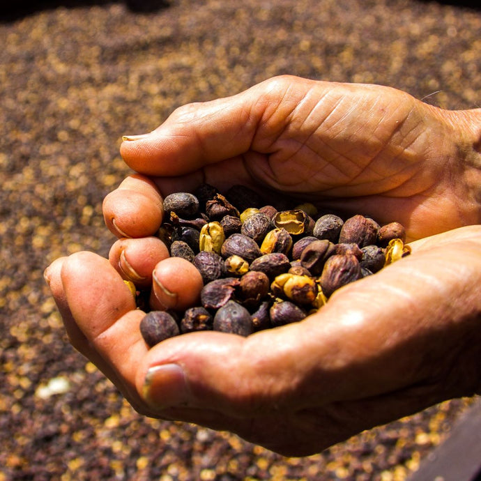 Cascara - Once Coffee Waste Now a Superfood
