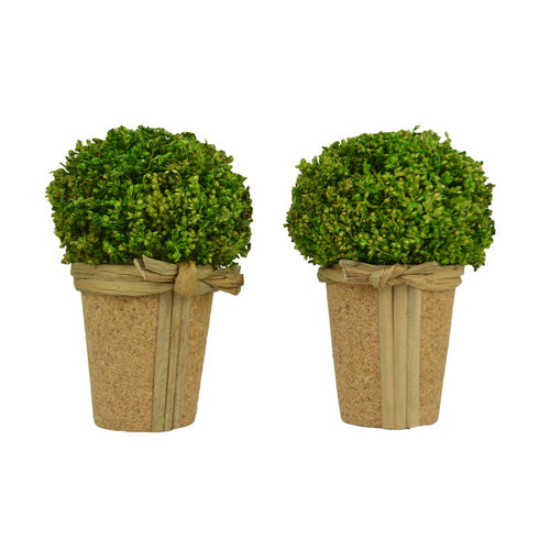 Boxwood Hanging 2 Piece Sitting Ball Boxwood Topiary In Planter Set Topiary - Galt International
