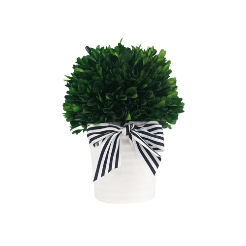 Green Boxwood Ball Topiary With Pot