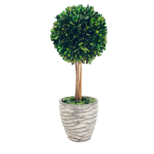 Preserved Boxwood Ball With Grey Pot