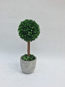 Grn Boxwood Ball W/Grey Pot