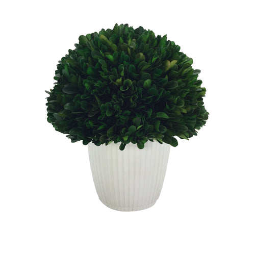 Preserved Boxwood Ball With Pot