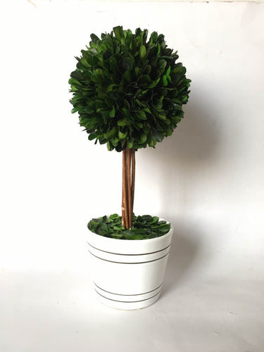 Green Boxwood Ball With White Pot