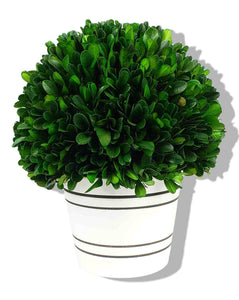 Grn Boxwood Ball W/White Pot