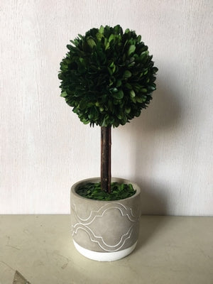 Green Boxwood Ball With Grey Pot