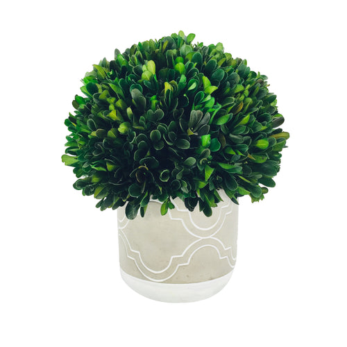 Green Boxwood Ball With Gray Pot