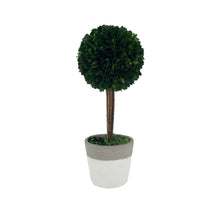 Load image into Gallery viewer, Preserved Boxwood Ball With Cement Pot
